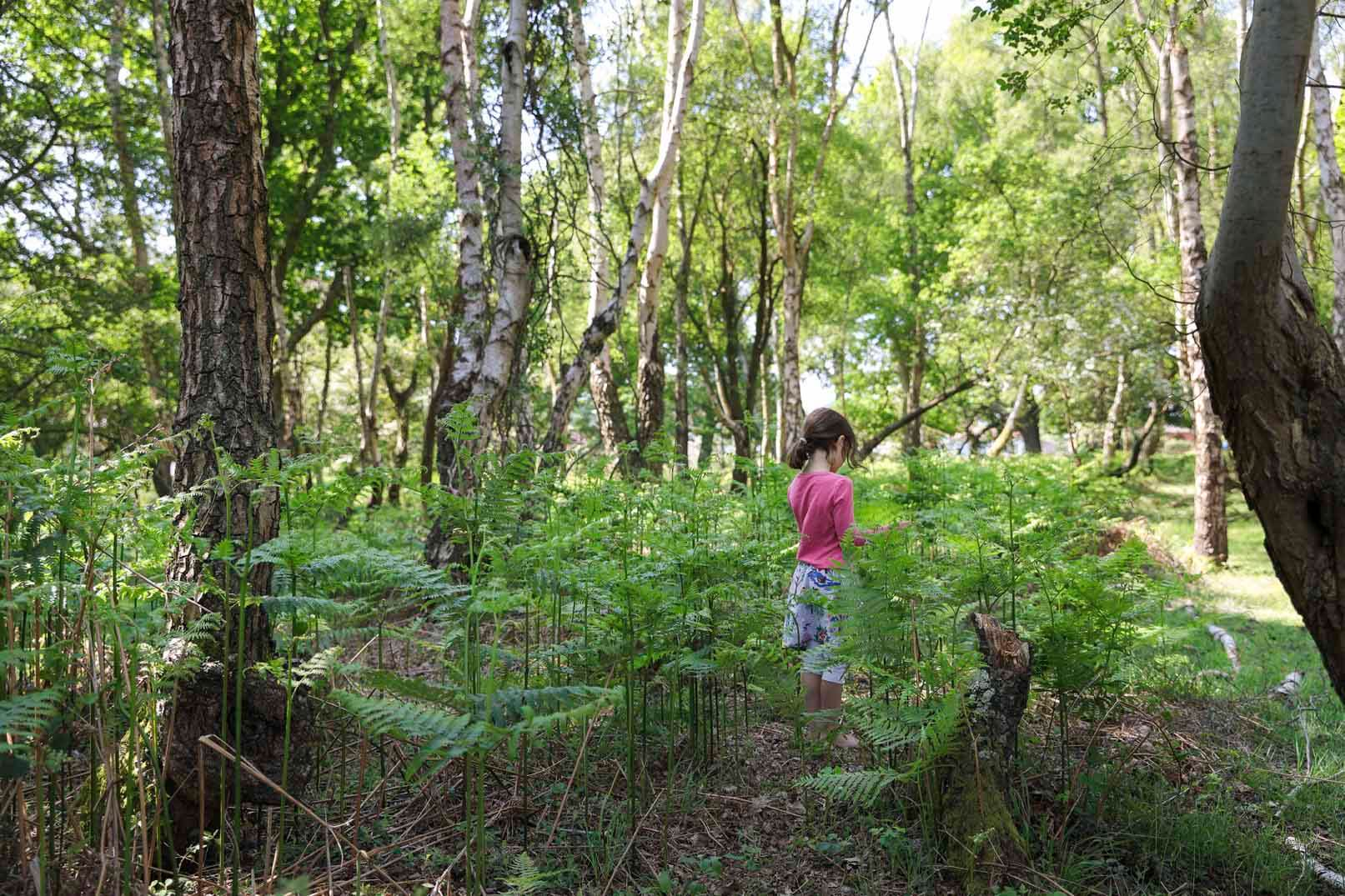 Go hunting bugs in the forest