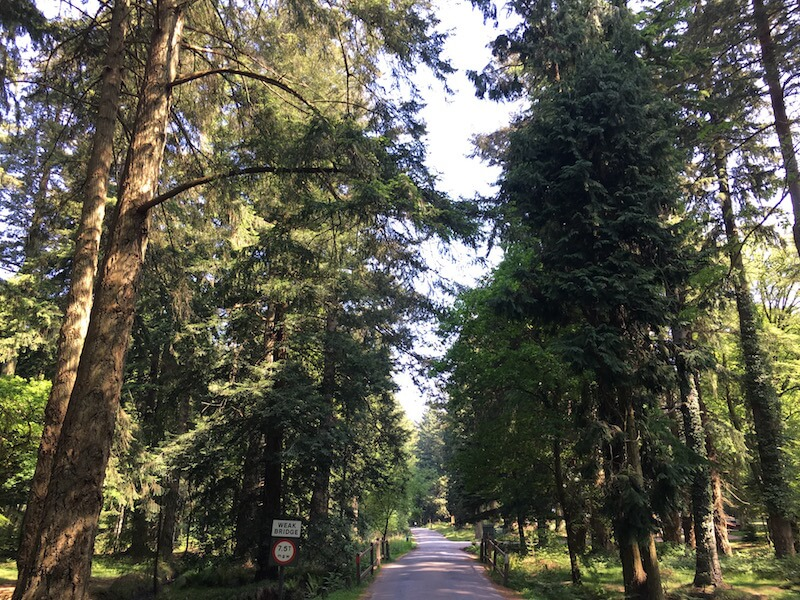 Rhinefield Drive - New FOrest